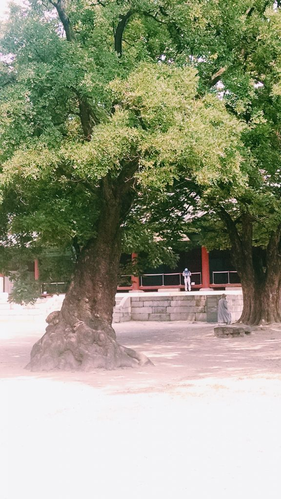 Ancient trees under which generations of Confucian students have studied and debated.